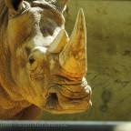 Im Dortmunder Zoo